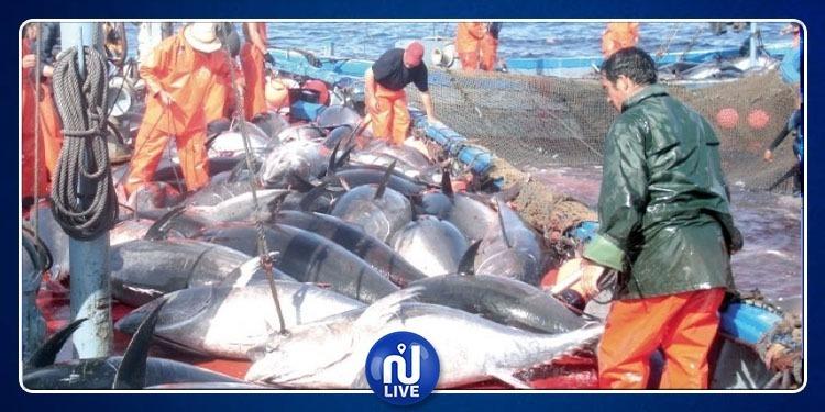 حجز 26 طنا من سمك التن الأحمر المحجر صيده بالمنستير
