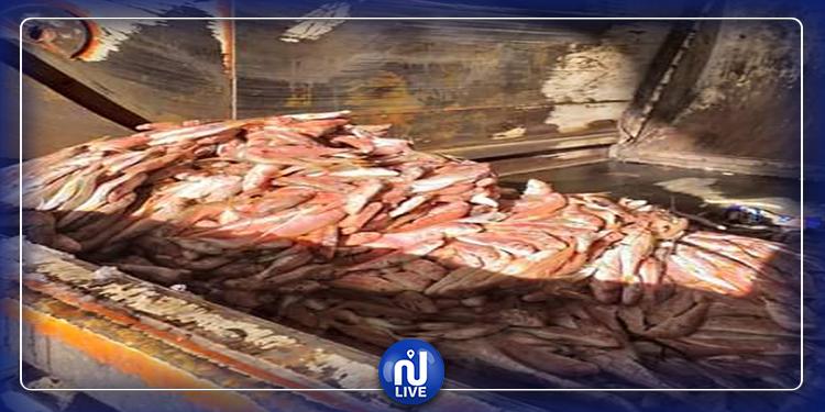 حجز وإتلاف 1000 كلغ سمك فاسد في طبرقة