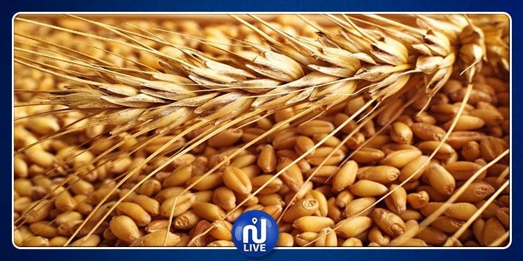 فرنسا تزود تونس بـ35% من إحتياجاتها من القمح