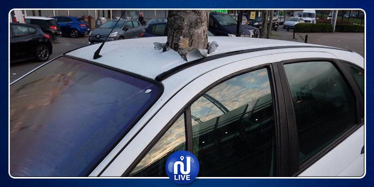 فيديو أثار جدلا واسعا...حكاية الشجرة التي ''نبتت'' فجأة وسط سيارة!