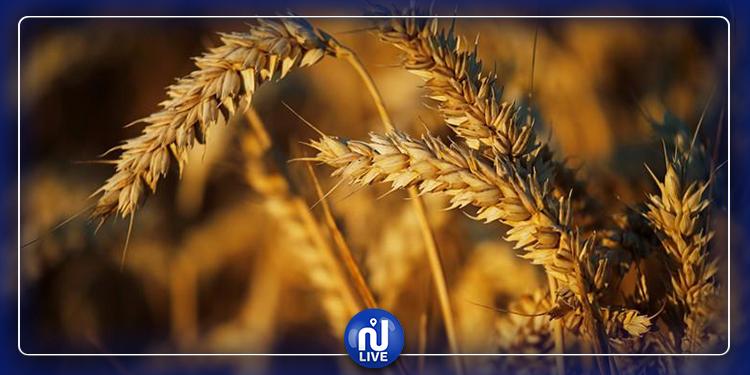 في أقل من شهر: تونس تطرح مناقصة ثانية لشراء 242 ألف طن من القمح والشعير