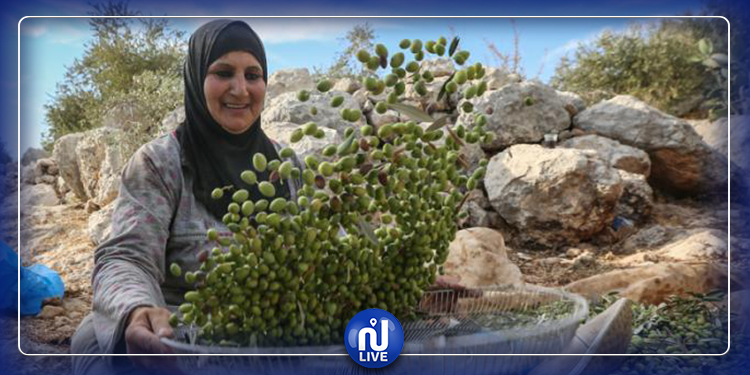 غزة المحاصرة تحقق الاكتفاء الذاتي من زيت الزيتون