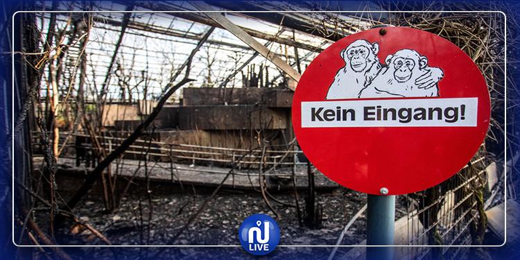 ألمانيا: نفوق عشرات القردة بحريق في حديقة حيوانات