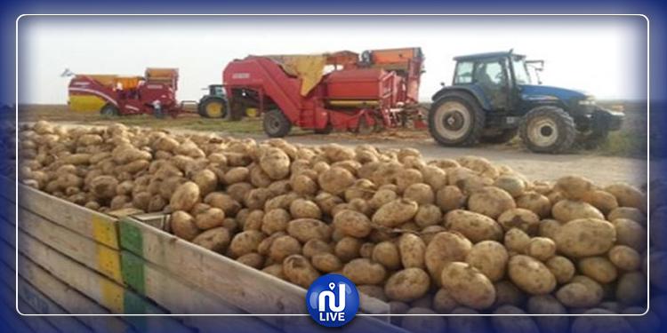 وزارة الفلاحة تتخلى عن توريد البطاطا