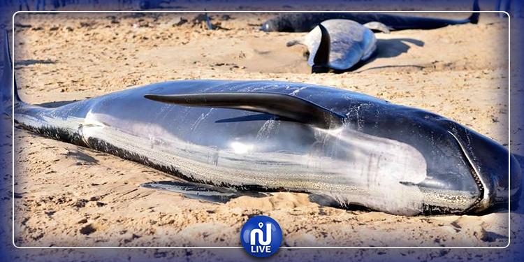 Les tempêtes solaires affectent les baleines grises