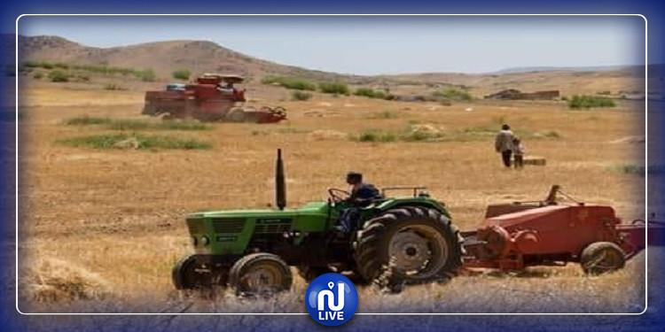 القيروان: انطلاق موسم الحصاد