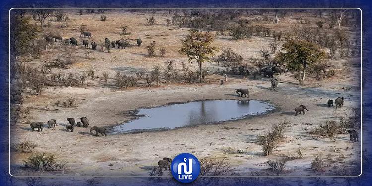 نفوق مئات الفيلة في بوتسوانا بمرض غامض
