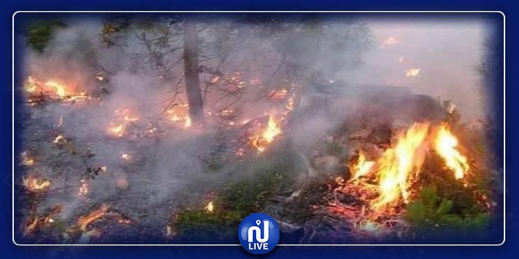 الكاف: الأمطار تطفئ الحرائق