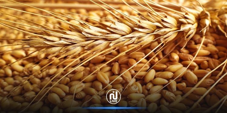 تونس تشتري 100 ألف طن من القمح
