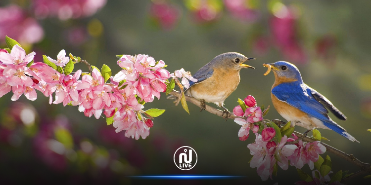 اليوم..دخول فصل الربيع