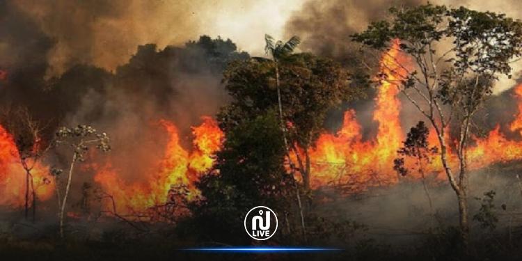 منوبة: حريق يأتى على مساحات غابة شعراء وأشجار ببرج العامري