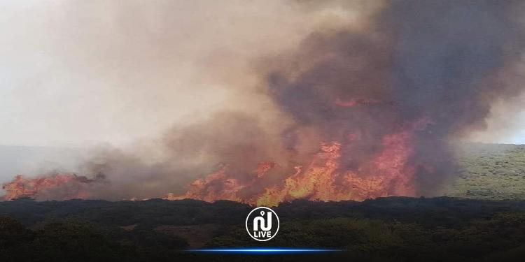 اندلع صباح اليوم: جهود متواصلة لإخماد حريق غابة كاف غراب بمنزل جميل