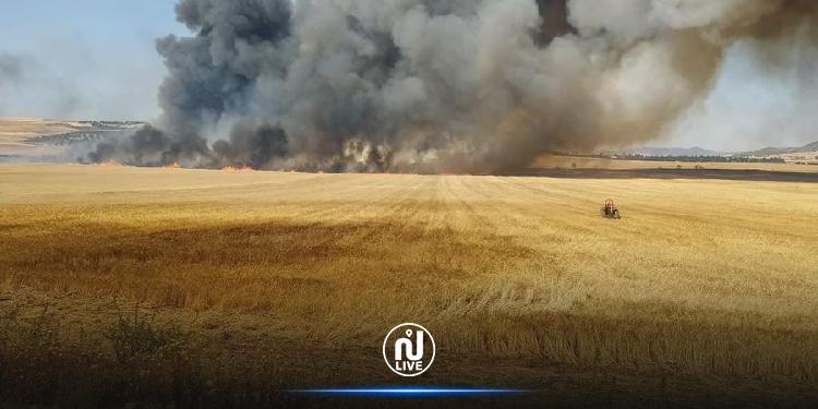 الكاف: حريق يأتي على أكثر من 50 هكتار من صابة الحبوب