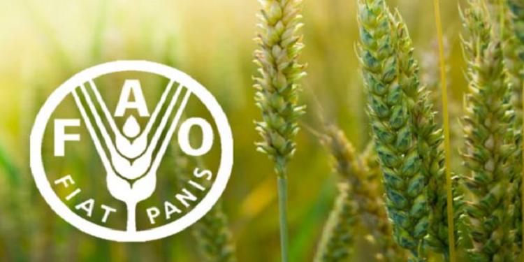 الفاو: ارتفاع الأسعار العالمية للزيوت النباتية والسكر والحبوب