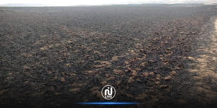 سليانة: حريق يأتي على 145 هكتارا منها 60 هكتار من القمح