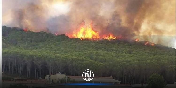 السيطرة علي حريق غابات غار الدماء