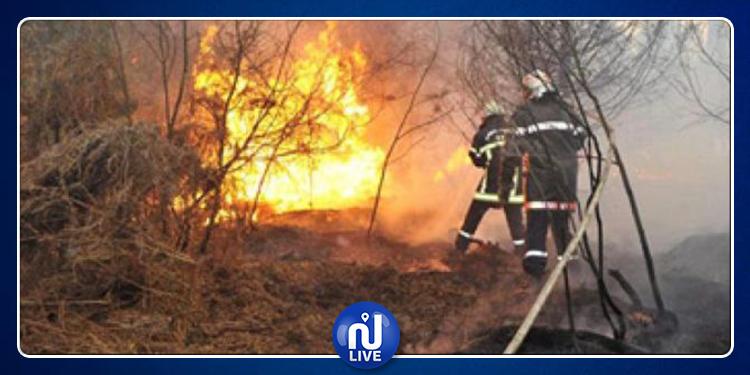 594 incendies circonscrits entre le 4 et le 13 juin 2019