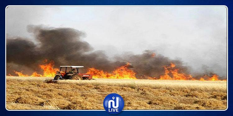 Le Kef: 5 hectares de céréales détruits par le feu