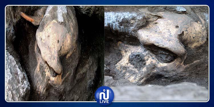 Indonésie : Découverte de fossiles humains de 1,8 million d'années