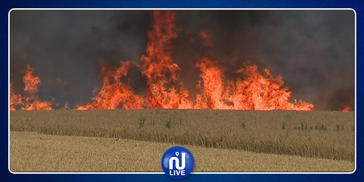 Siliana: Un incendie ayant ravagé des résidus de moisson, maitrisé