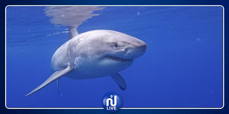 la Tunisie classée 2è plus gros pêcheur de requins, espèces en voie de disparition…