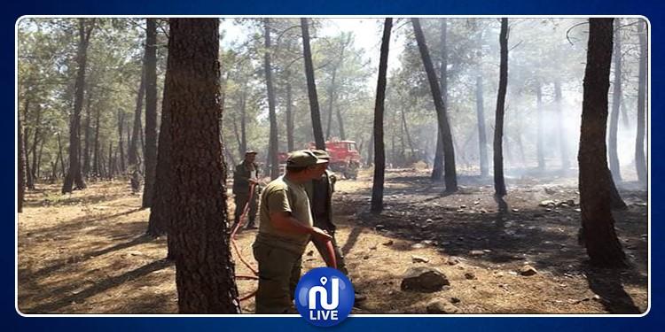 Bizerte: l'incendie dans une forêt à Sejnane, maîtrisé
