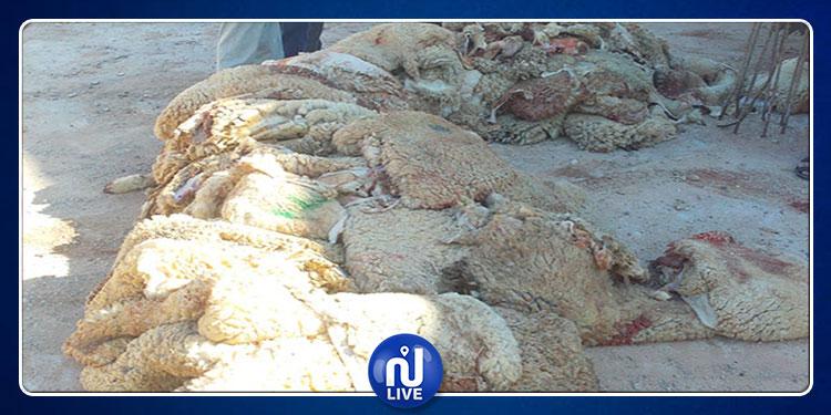 Ben Arous-Aïd Al Idha: Plan pour la collecte des peaux de mouton