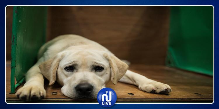 Un chien refuse de quitter le cercueil de son maître décédé (vidéo)
