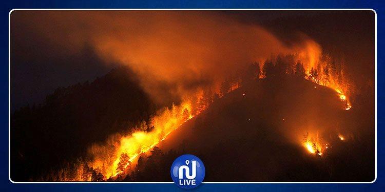 Bizerte: L'incendie dans la forêt de Rimel maîtrisé