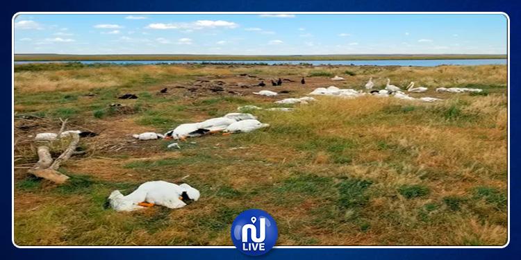 USA : Une tempête de grêle tue plus de 11 000 oiseaux