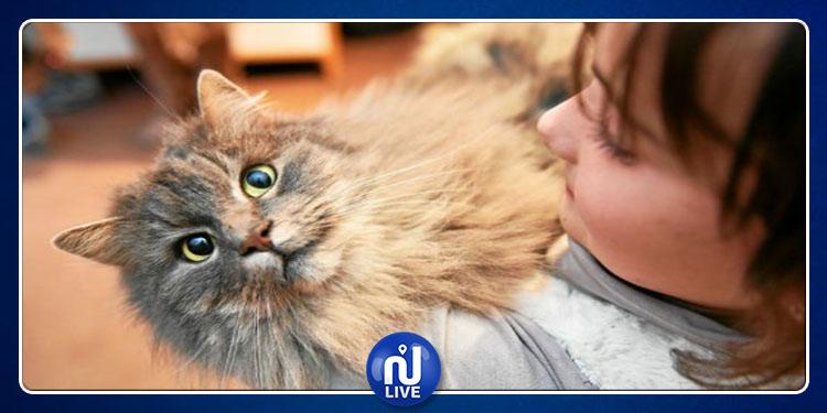 Bientôt un vaccin contre les allergies aux chats…