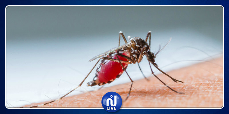 Le nombre de décès lié à la dengue quadruple en un an au Brésil