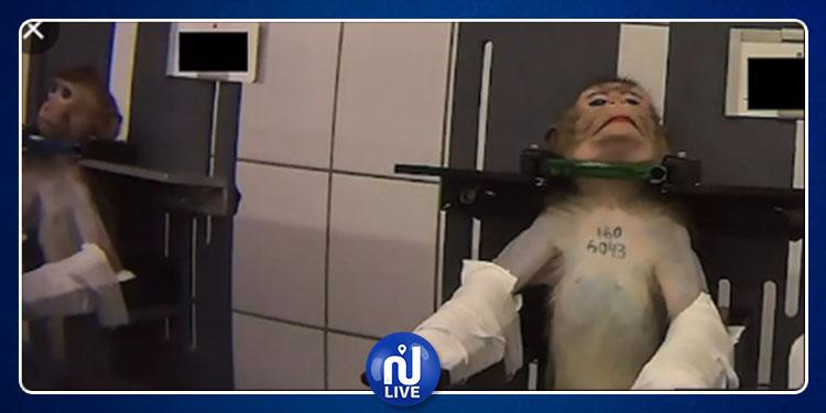 Maltraitance animale : la vidéo choc d'une association allemande...