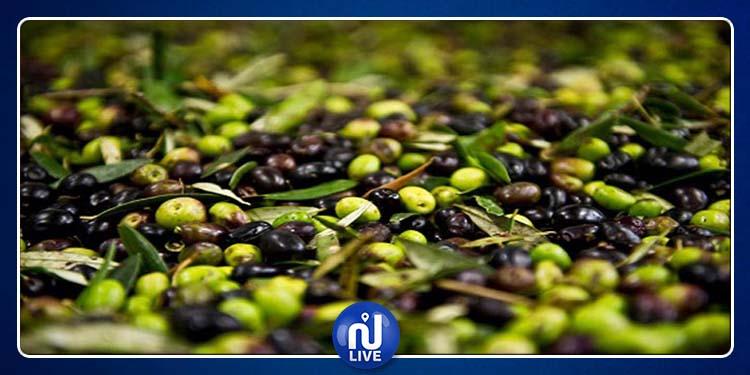 Sidi Bouzid : Une récolte record des olives attendue, cette saison