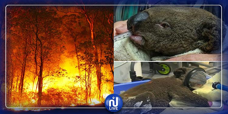 Australie : près de 500 millions d'animaux sont déjà morts dans les incendies