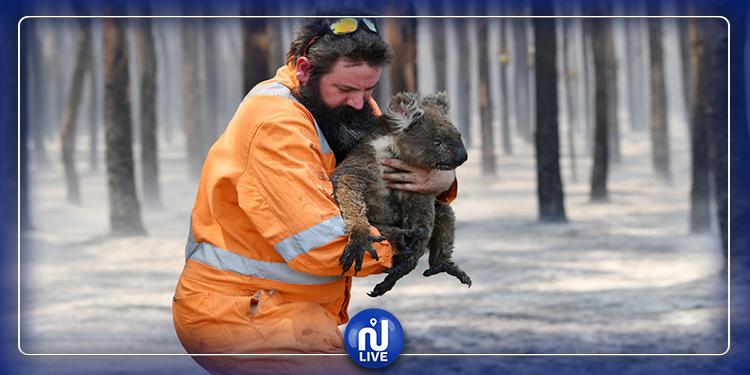 Incendies en Australie : pas moins de 1,25 milliard d'animaux disparus