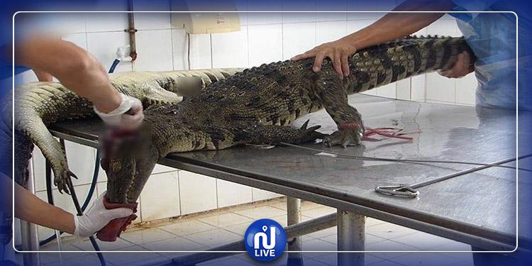 Les crocodiles tués brutalement pour en faire des sacs de luxe