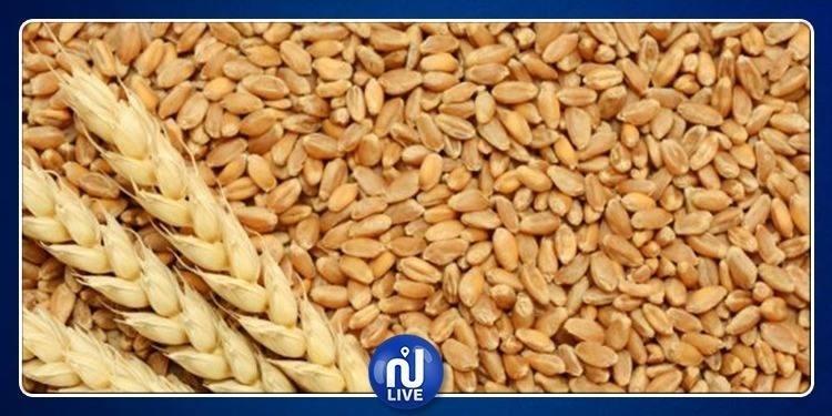 Siliana-Céréales : Récolte record en prévision