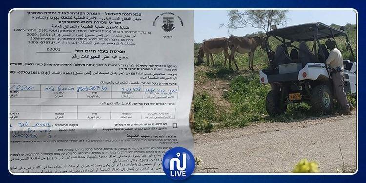 الكيان الصهيوني يعتقل حمارين !