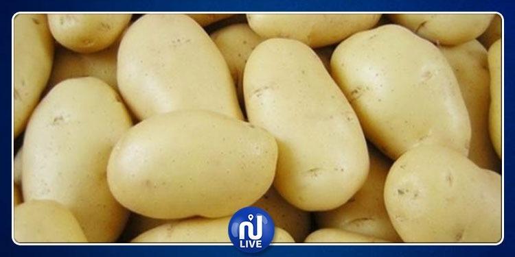 جندوبة: المطالبة بترويج البطاطا الصيفية المهددة بمرض ''لميلديو''