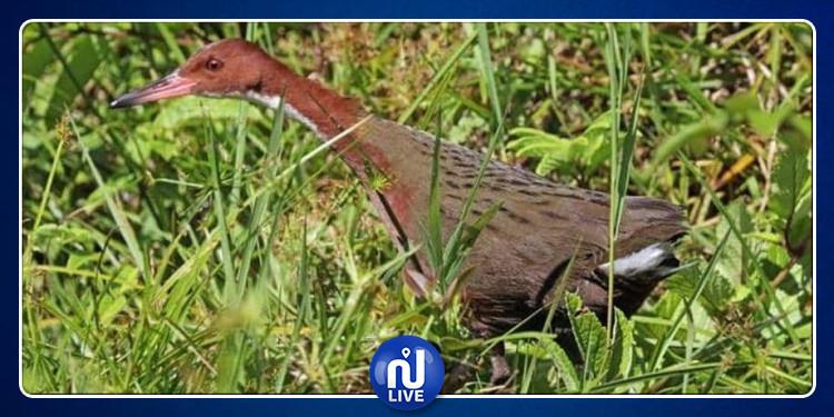 بعد آلاف السنين من انقراضه.. طائر غريب يعود للحياة