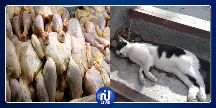 الجيارة: مداهمة مسلخ عشوائي يديره تكفيري وحجز قطط مذبوحة مع الدجاج