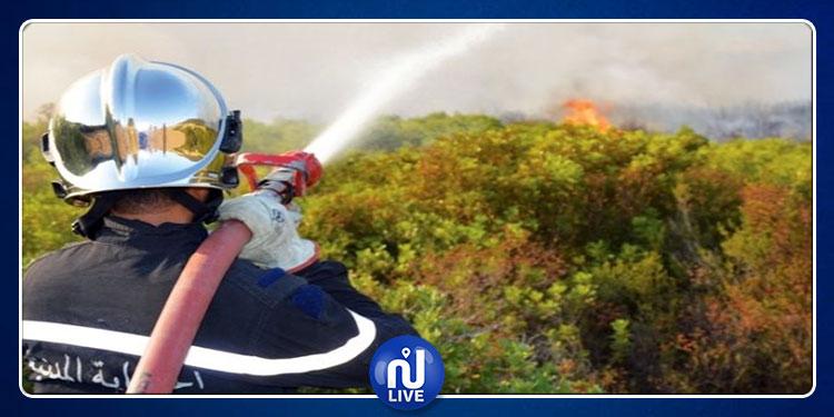 غدا: حملة تحسيسية للديوان الوطني للحماية المدنية للوقاية من الحرائق