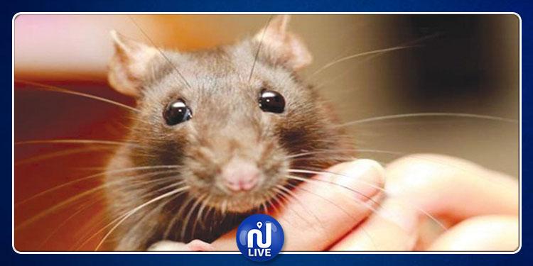 فأر منزلي يعض مُربيته ويرديها قتيلة !