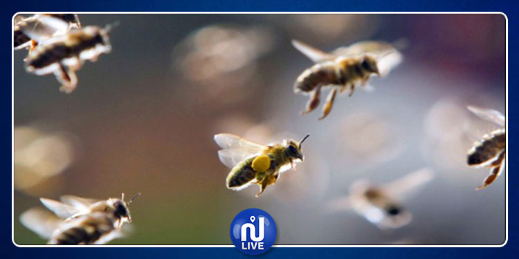 النحل يهاجم مباراة لكرة القدم  ويؤخرها 20 دقيقة