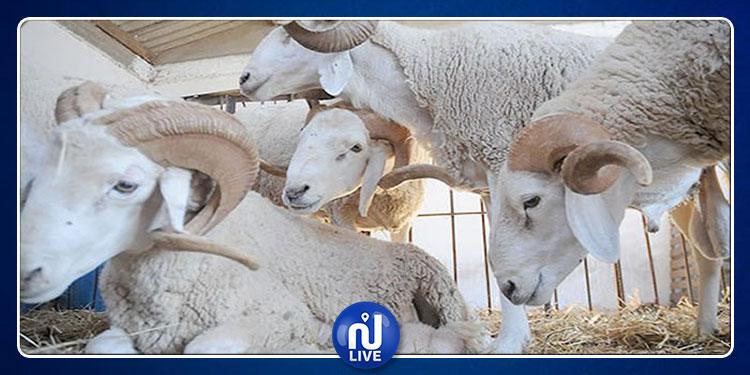 حملة تحسيسية للمعهد الوطني للتغذية شعارها ''عيد دون كيس مائي''