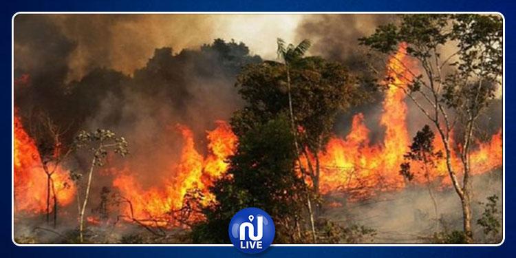 لأكثر من أسبوع: النيران تلتهم غابات الأمازون والعلماء متخوفون