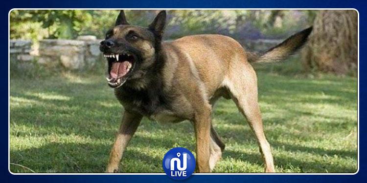 بن عروس: قتل كلب مسعور هاجم وعضّ 12 شخصا (فيديو)