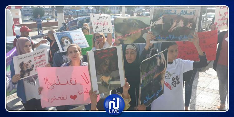 سوسة : ناشطون للرفق بالحيوان يحتجون أمام بلدية سوسة