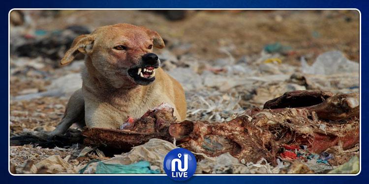 القصرين : مصب فضلات 'وادي عمار الطويل' بؤرة لداء الكلب
